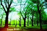 Snow Birds by Csaba Teglas. Directed by Michael Thomas Cain with Jon Barb and Leslie Smithey