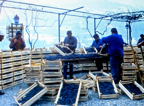 conte brandolini et nino negri wineries 012