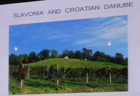 vina croatia 093