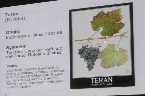 vina croatia 104