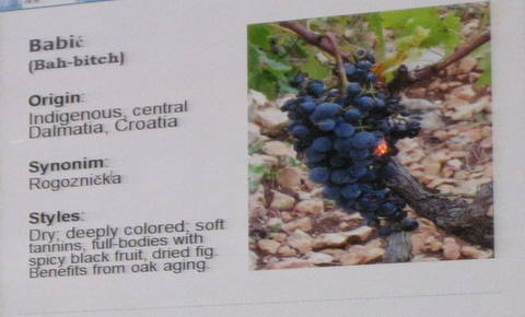 vina croatia 136