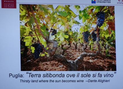 """Puglia, land of great wines and the """"green gold."""" (olive oil)"""