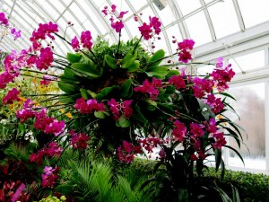 orchids, NYBG, The Orchid Show, Marc Hachadourian