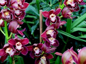 NYBG, The Orchid Show, orchids, Marc Hachadourian