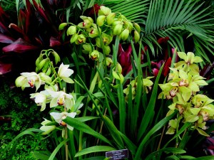 13th Annual NYBG Orchid Show. Photo by Carole Di Tosti
