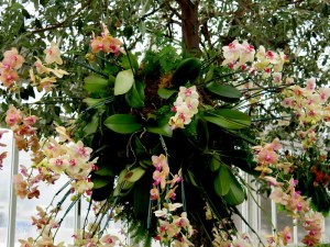 Different varieties of orchids create a lacy effect. The Orchid Show: Chandeliers, NYBG. Photo by Carole Di Tosti