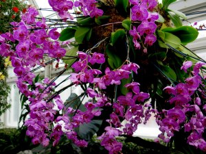 orchids, NYBG, Orchid Show, orchid chandeliers, Marc Hahadourian
