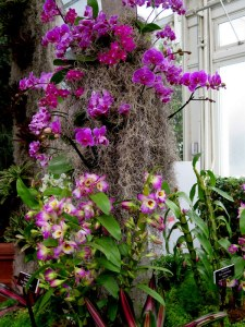 The arrangement at The 13th Annual Orchid Show at NYBG are breathtaking. PHoto by Carole Di Tosti