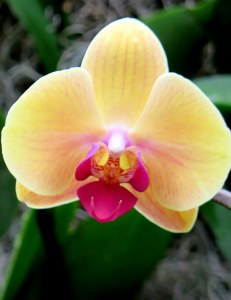 NYBG, orchids, The Orchid Show, Marc Hachadourian, Orchid Curator at NYBG