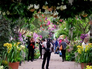 The walkways are a colorful pageant of orchids high in the air and on the ground. Around 200,000 or more people come to The Orchid Show each year. NYBG. Photo by Carole Di Tosti
