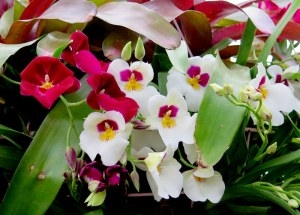 orchids, NYBG, Marc Hachadourian, The Orchid Show