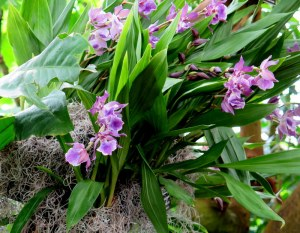 The 13th Annual Orchid Show at the NYBG. Photo by Carole Di Tosti