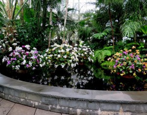 The entrance displays at the NYBG Orchid Show: Chandeliers.