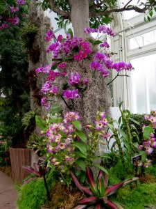 Theordore Roethke described orchids blooms as adder tonged. The 13th Annual Orchid Show at the NYBG. Photo by Carole Di Tosti