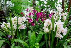 NYBG, orchids, The Orchid Show, Marc Hachadourian