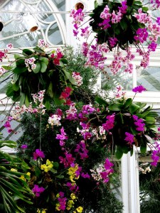 Orchids are the largest flowering plant family and they vary size from the head of a pin to 25 feet tall. Photo by Carole Di Tosti, The Orchid Show at NYBG.
