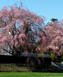 NYBG, springtime, Earth Day Weekend-April 22-24 2016