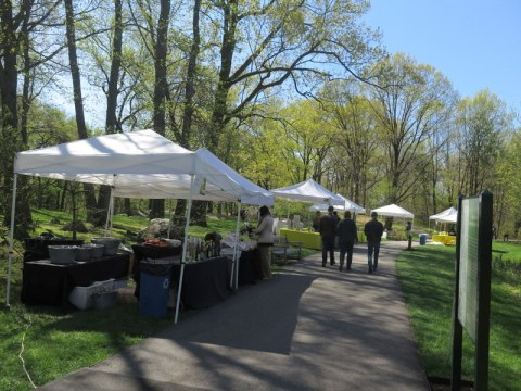 NYBG, 125th Anniversary, Daffodil Weekend, one million daffodil initiative