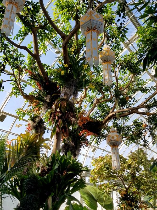 Sky Lanterns, khom loi, NYBG, Orchid Show: Thailand