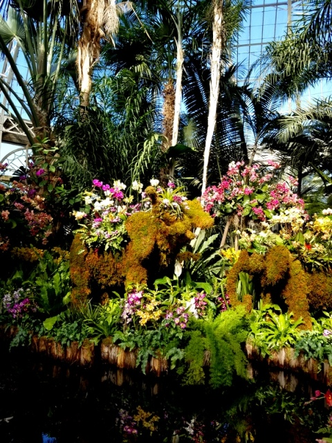 Palms of the World Gallery, NYBG, Orchid Show: Thailand, 15th Annual Orchid Show