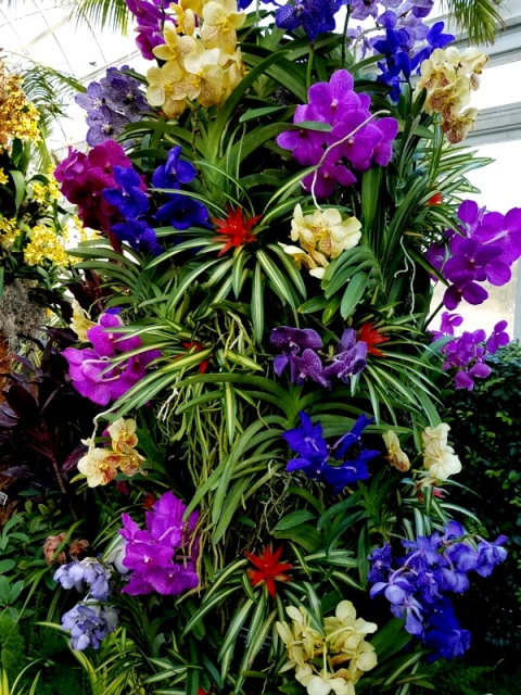 Vandas, Bromeliads, Phaelaenopsis, NYBG, Orchid Show: Thailand