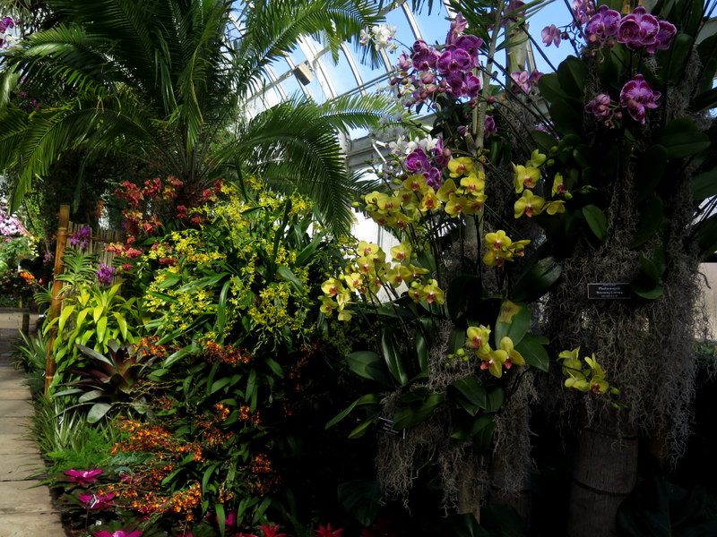 Phaelaenopsis, Bromeliads, Palms, Oncidium, NYBG, Orchid Show: Thailand