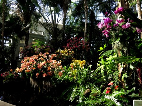 Palms of the World Gallery, NYBG, Orchid Show: Thailand
