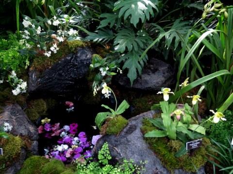Paphiopedilum, Phalaenopsis NYBG, Orchid Show: Thailand