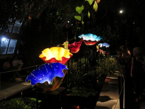 Dale Chihuly, Macchia Forrest, NYBG 2017, Chihuly Nights