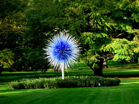 C, NYBG 2017, Dale Chihulyhihuly Exhibit, 'Sapphire Star,' 2010