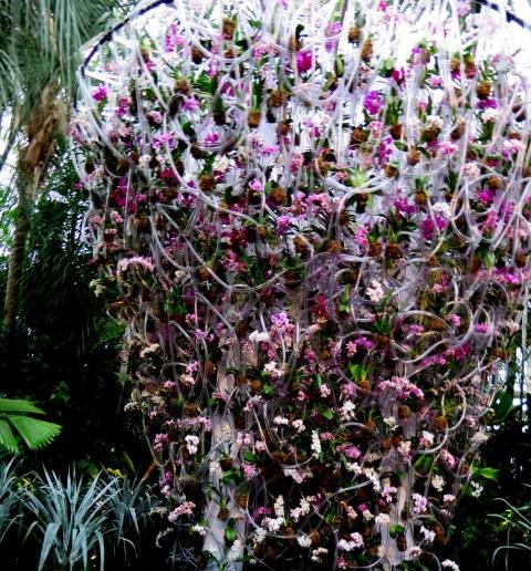 Belgian floral artist, Daniël Ost, 2018 NYBG Orchid Show