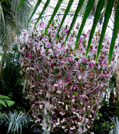 2018 NYBG Orchid Show, Palms of the World Gallery, Daniël Ost,