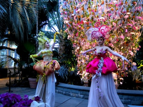 Orchid Dancers, Orchid Evenings, 2018 NYBG Orchid Show, Daniël Ost,