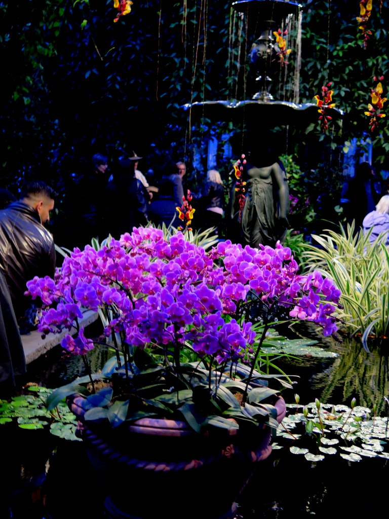 2018 NYBG Orchid Show, orchid evenings, Belgian floral artist, Daniël Ost,