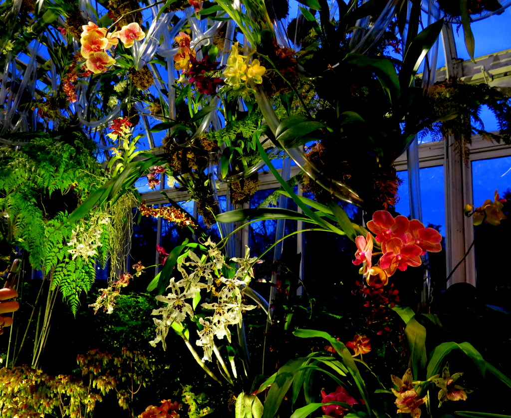 2018 NYBG Orchid Show, orchid evenings, Daniël Ost, Belgian floral artist