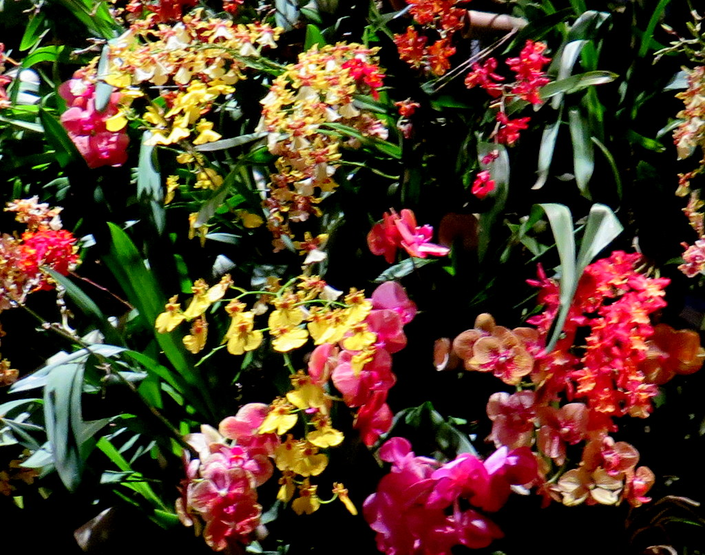 2018 NYBG Orchid Show, orchid evenings,