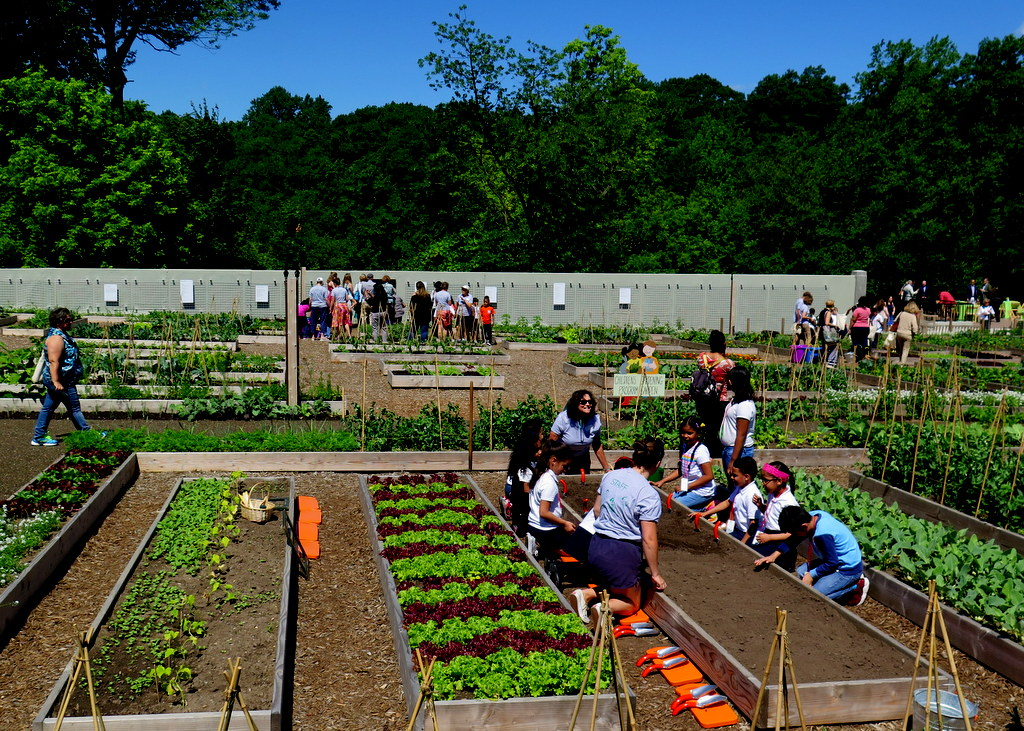 NYBG, Edible Academy, Opening Day Ceremonies June 14