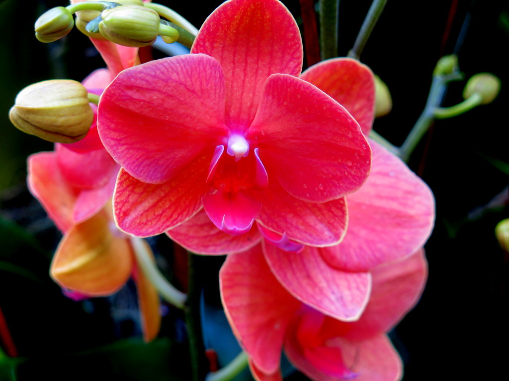 The Orchid Show: Singapore, 17th Annual Orchid Show, NYBG, Enid A. Haupt Conservatory, Singapore, Supertrees, NYBG