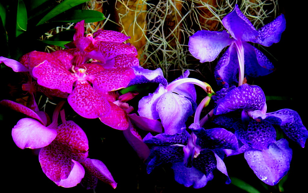 The 17th Annual Orchid Show, The Orchid Show: Singapore, NYBG, #plantlove, #orchidshownybg