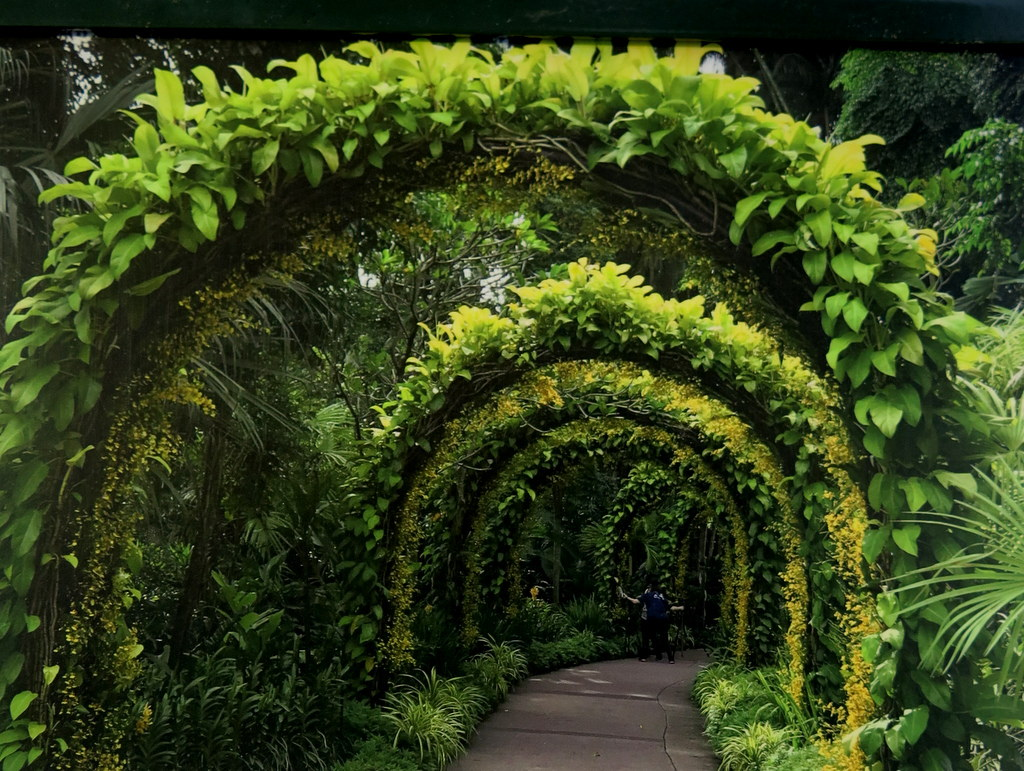 Arhes of Singapore Botanic Gardens' National Orchid Garden, NYBG Orchid Show: Singapore, City in a Garden, Singpore
