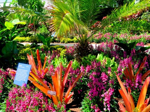 "'Brazilian Modern"" The Living Art of Roberto Burle Marx,' NYBG Installation (June 8-September 29)"