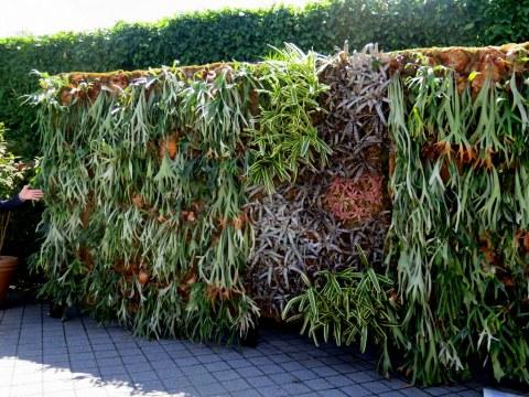 "Water Garden, Staghorn Ferns, a Burle Marx favorite,'Brazilian Modern"" The Living Art of Roberto Burle Marx,' NYBG Installation (June 8-September 29)"