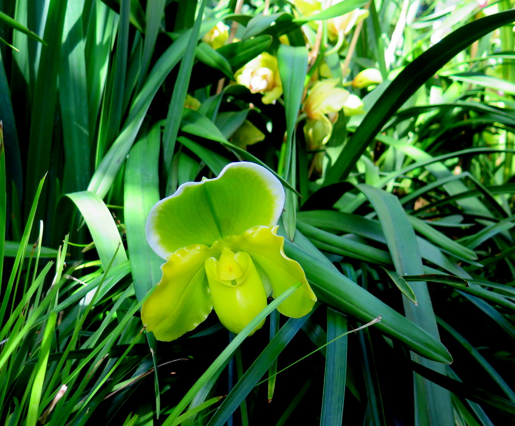 Grasslands, The Orchid Show: Jeff Leatham's Kaleidoscope, 18th Annual Orchid Show, NYBG