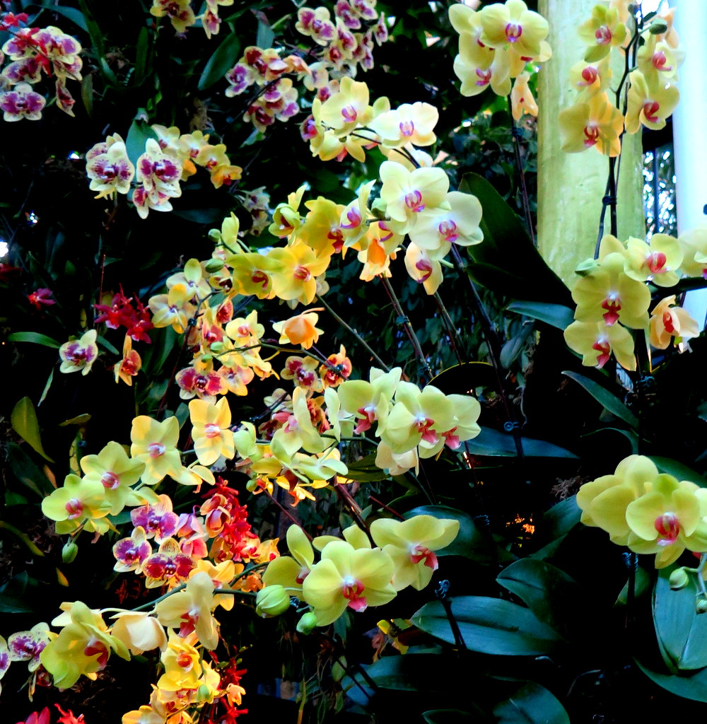 The Orchid Show: Jeff Leatham's Kaleidoscope, NYBG 18th Orchid Show, Jeff Leatham, NYBG