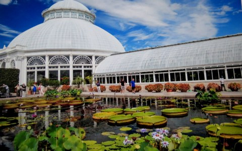NYBG, Water Lilies and Lotus Pond, New York Forward Phase Four, Governor Cuomo, Appreciation Week, Public Opening 28 July
